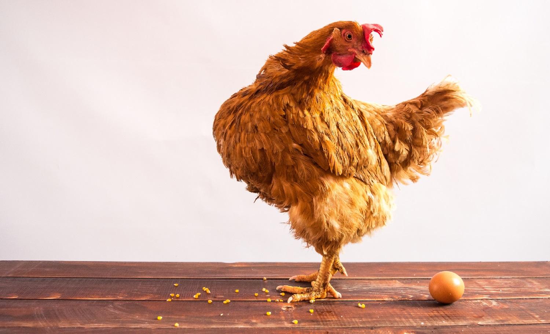 Web tax - meglio l'uovo oggi o la gallina domani?