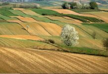 Umbria Food Cluster