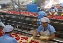 Casar industria alimentare