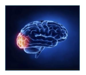 L'attivazione del lobo occipitale durante l'osservazione di un visual advertising