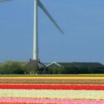 SAP sostenibilità